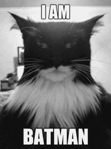batman among cats